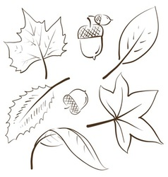 Doodle autumn fall leaves acorn vector