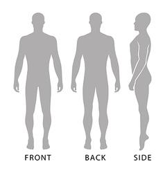 Fashion bald man full length template figure vector