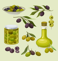 glass bottle of oil and canned olives branches vector image
