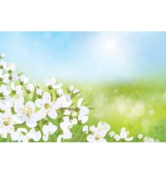spring nature blossom tree vector image