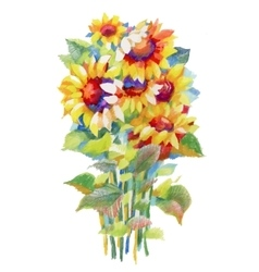 Blooming beautiful sunflowers watercolor vector image