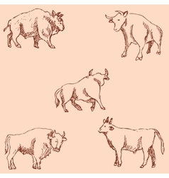 Bulls Sketch pencil Drawing by hand Vintage vector