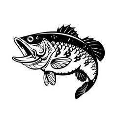Graphic bass fish vector