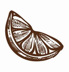 oragne fruit slice lush organic product monochrome vector image