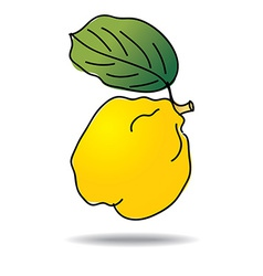 Freehand drawing quince icon vector