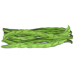 Group of green beans vector