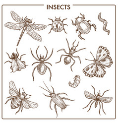 Insects that fly and creep monochrome sepia vector