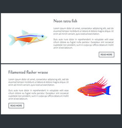 Neon tetra fish and flasher vector
