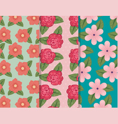 set flowers pants with petals and leaves vector image
