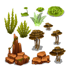 The set of algae and underwater rocks isolated on vector