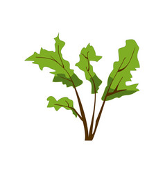 green herbal plant isolated on white bush with vector image