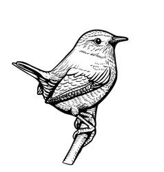 cute hand drawn wren vector image