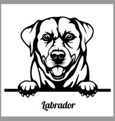 Labrador - peeking dogs - - breed face head vector