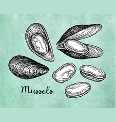 Mussels ink sketch on old paper vector