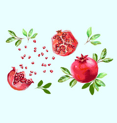 pomegranate set with leaves half pomegranate and vector image