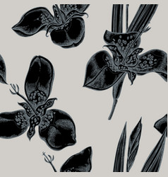 seamless pattern with hand drawn stylized tigridia vector image