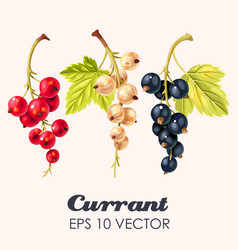 set high detailed currant berries vector image