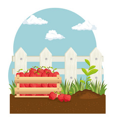 Tomatoes basket farm product vector