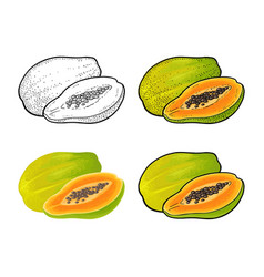 whole and half papaya color vintage vector image