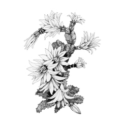 Beautiful monochrome flowers vector image