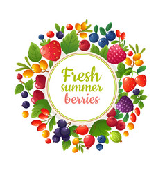 fresh organic summer berries and fruits healthy vector image