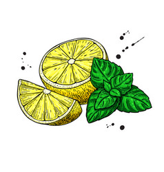 Lemons and mint drawing hand drawn slice vector
