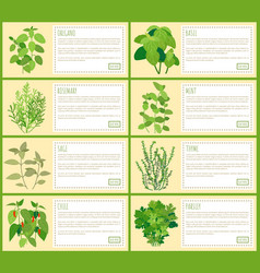 Natural herbal spices with description banners set vector