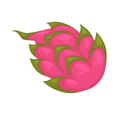 pitaya or ripe dragon fruit isolated on white vector image