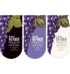 Set wine labels with grapes vector