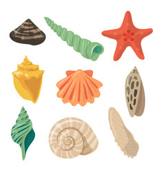 Summer tropical objects marine shells in cartoon vector