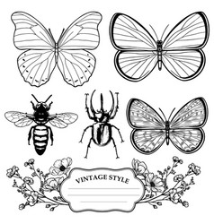 vintage victorian outline insect collection vector image