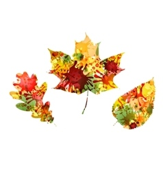 autumn design colorful leaves vector image