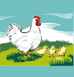 Hen chicks teaches how to find food vector