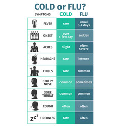 Infographics cold or flu symptoms vector