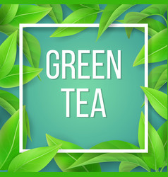 leaves green tea natural background vector image