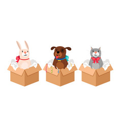 Pets in boxes vector