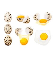 Quail eggs set vector