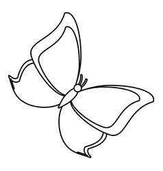 Butterfly animal insect fly thin line vector