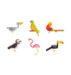 birds set toucan pelican flamingo parrot bird vector image