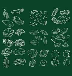 chalk sketch set nuts vector image