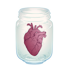 human heart in glass jar isolated sticker print vector image