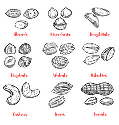 Set of nuts design elements for poster menu vector