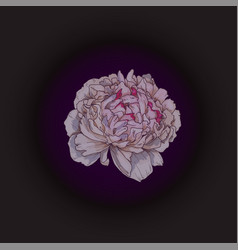 hand drawn gently pink peony bud isolated vector image vector image