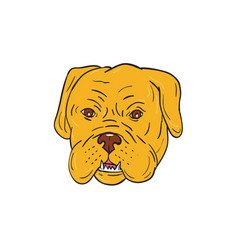 Bordeaux dog head cartoon vector