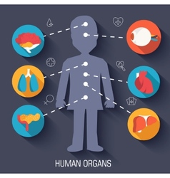 Flat human organs icons concept background vector