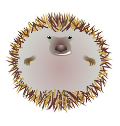 Hedgehog in the circle vector image