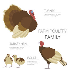 poultry farming turkey family isolated on white vector image