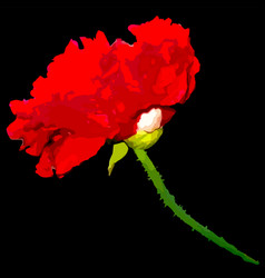 Red terry poppy on a black background vector