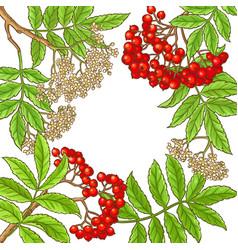 rowan branch frame vector image