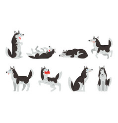 siberian husky character sett dog in different vector image